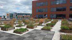 L'expérimentation en cours se déroule sur les toits du Millénaire 1, immeuble d'Acide à Aubervilliers. ©CDC Biodiversité