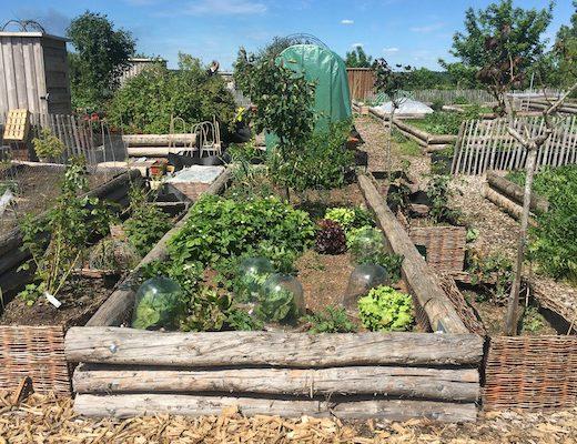 Des friches transformées en fermes urbaines